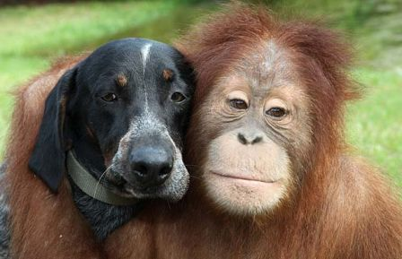 Surya et Roscoe