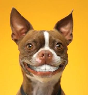 Un petit sourire