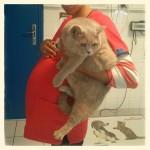 Une femme enceinte et son chat